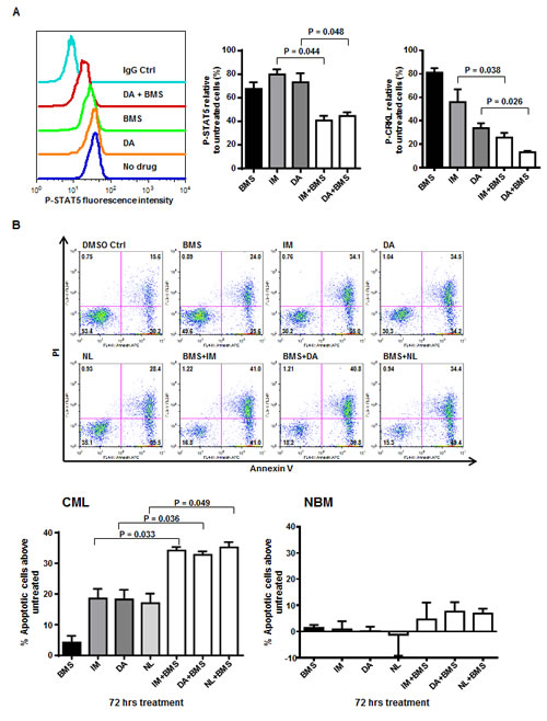 A combination of BMS-911543 and tyrosine kinase inhibitors (TKIs) results in a significant reduction in BCR-ABL and JAK2/STAT5 activities and induction of apoptosis of CD34