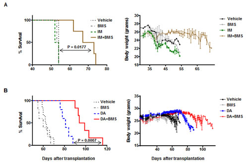 A combination of BMS-911543 and TKIs significantly enhances survival of leukemic mice.