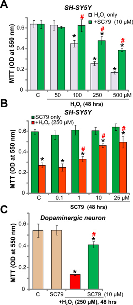 SC79 protects dopaminergic neurons from H2O2.