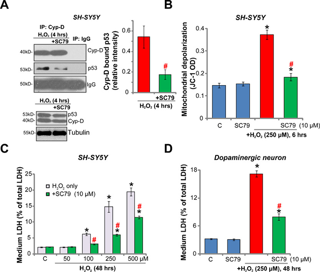 SC79 inhibits H2O2-induced programmed necrosis in dopaminergic neurons.