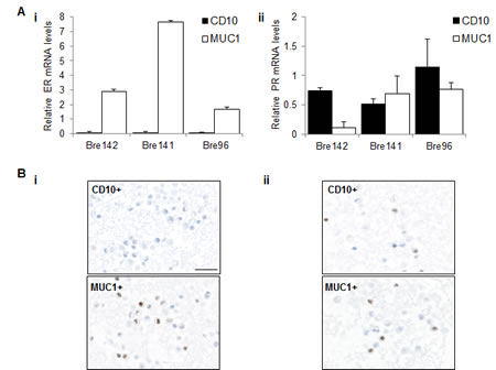 ER and PR expression in luminal and basal cell subsets.