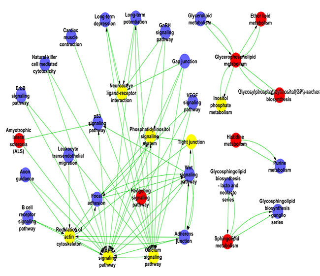 The pathway network of the differentially expressed genes in HPC mice.
