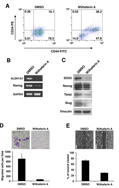 Withaferin A suppresses the CSC properties of iCSCL-10A cells.