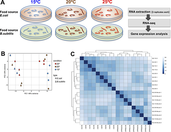 Transcriptional effect of diet and temperature on C.elegans.