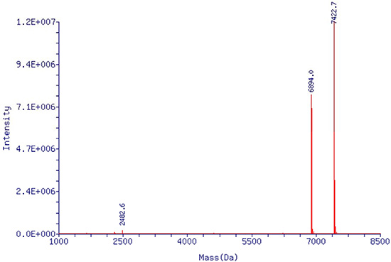 Mass spectrometry report of single stranded EpDT3 aptamer.
