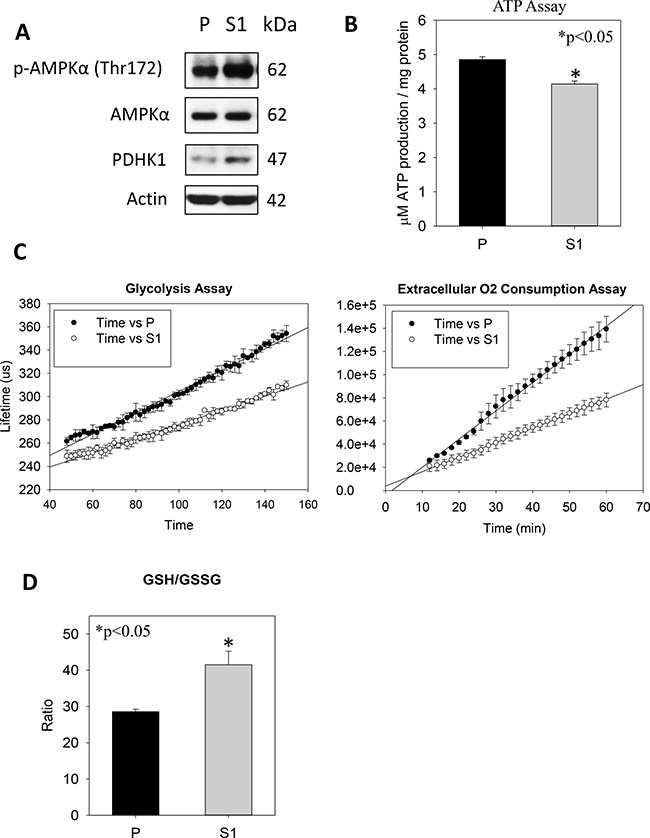 Metabolism effects of STC1 overexpression on MHCC-97L (S1) in culture.