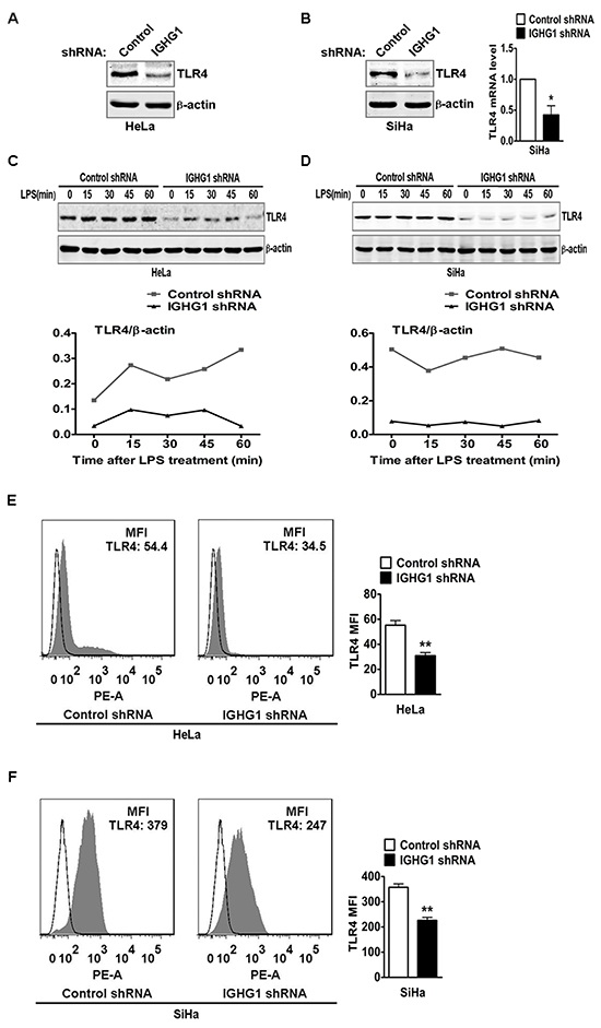 Reduction of IgG downregulated TLR4 expression.