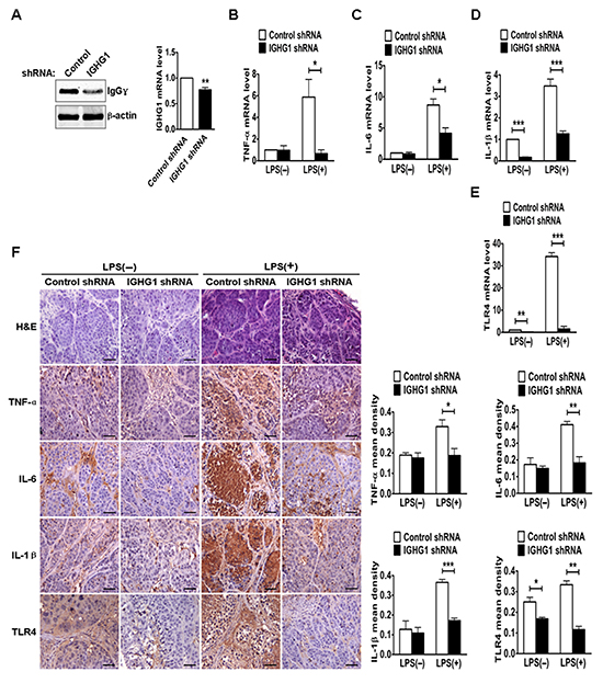 Reduction of IgG reduced LPS-induced proinflammatory cytokine production in vivo.