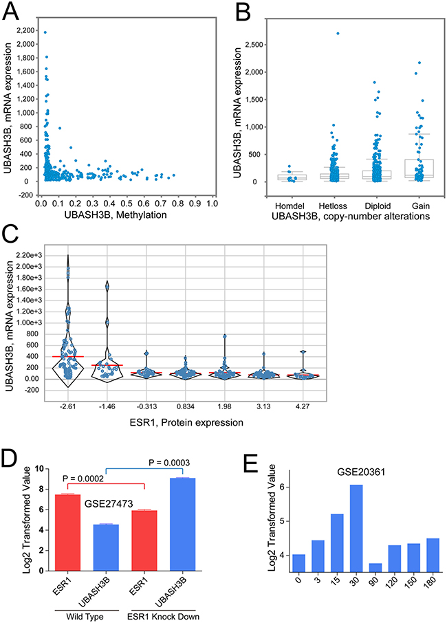 UBASH3B expression is negatively regulated by ESR.