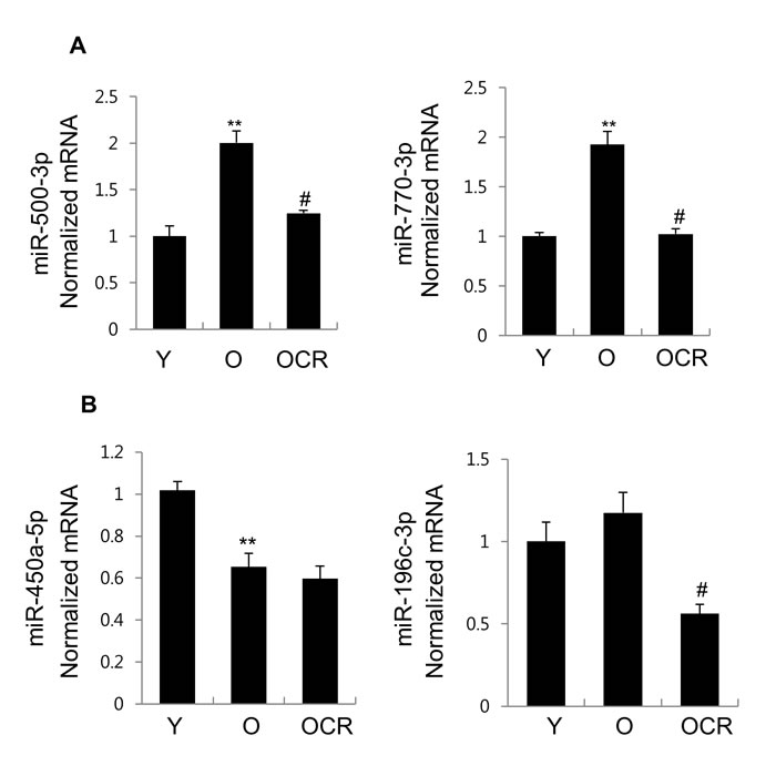 Expression of 4 miRNAs in exosomes purified from young, old, and old-CR rats.