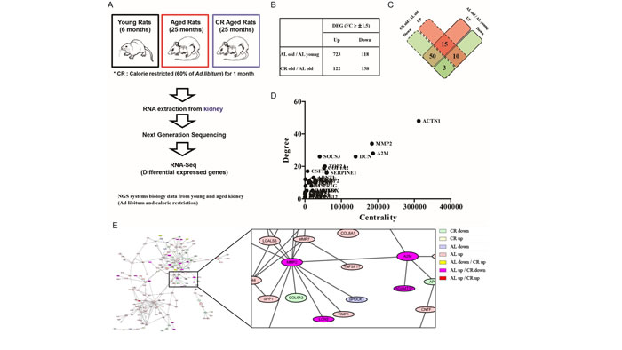 Importance of MMP2 and A2M interaction during aging identified by RNA-Seq based on NGS data.