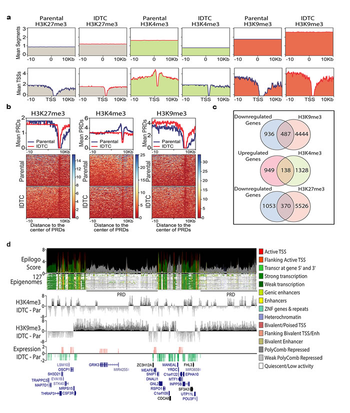 Genome-wide re-distribution of histone modifications in IDTCs.
