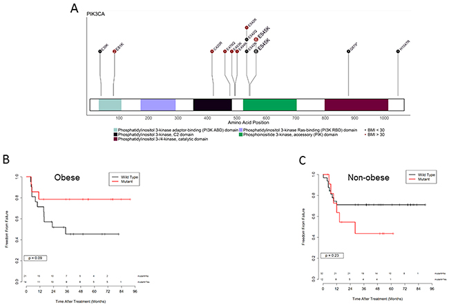 PI3K pathway mutations and outcome in obese versus non obese patients.