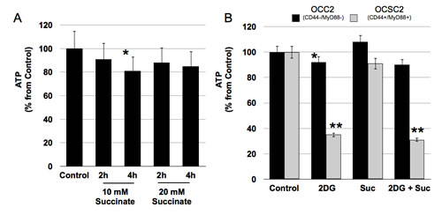 CD44+/MyD88+ EOC stem cells cannot switch to oxidative phosphorylation when glucose levels are limiting.