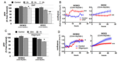 Oxidative phosphorylation is dispensable in the survival of CD44+/MyD88+ EOC stem cells.
