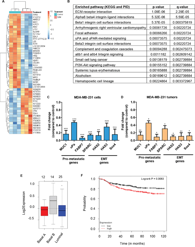 Gene expression analysis of MDA-MB-231 cells and tumors treated with SAM.