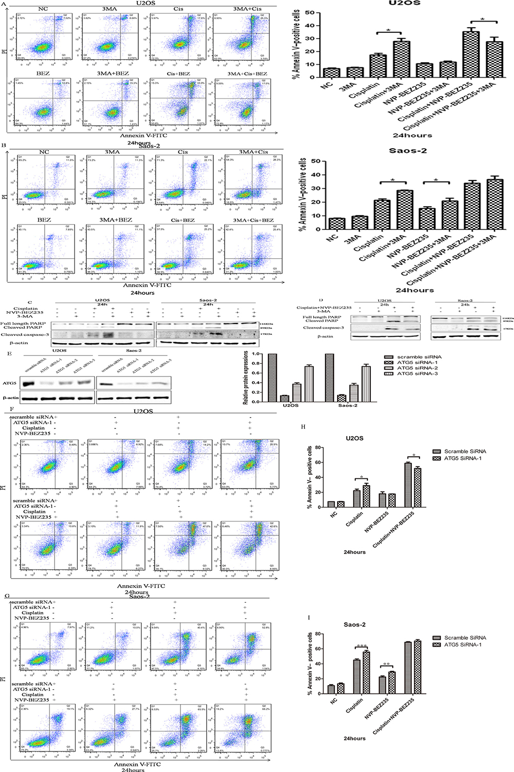 NVP-BEZ235 switches function of autophagy induced by cisplatin in U2OS and Saos-2 cells.