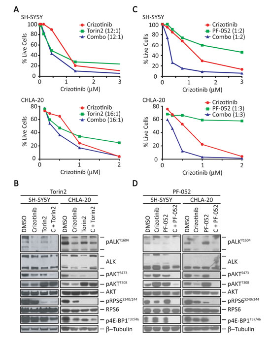 Combination of crizotinib and a dual PI3K/mTOR inhibitor results in synergistic activity in