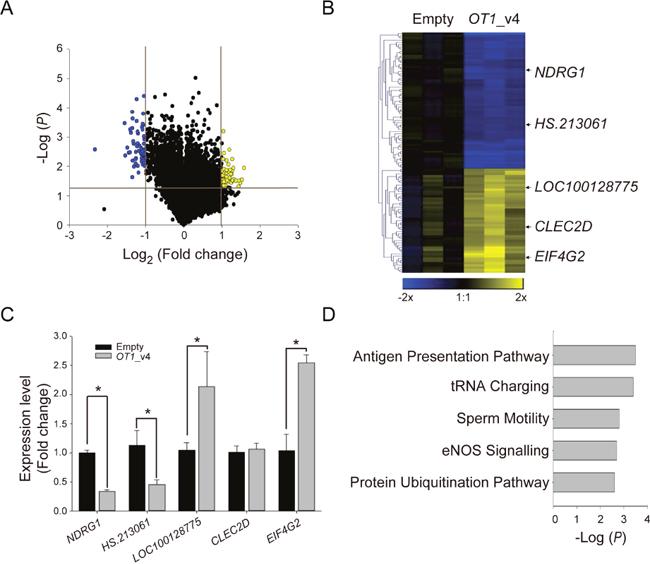 Identification of NDRG1-OT1_v4-regulated genes using microarray analysis.