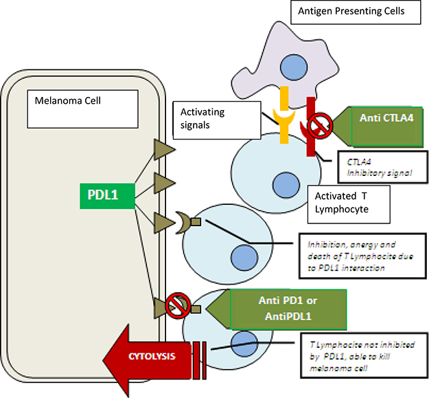 Oncotarget | Current status and perspectives in