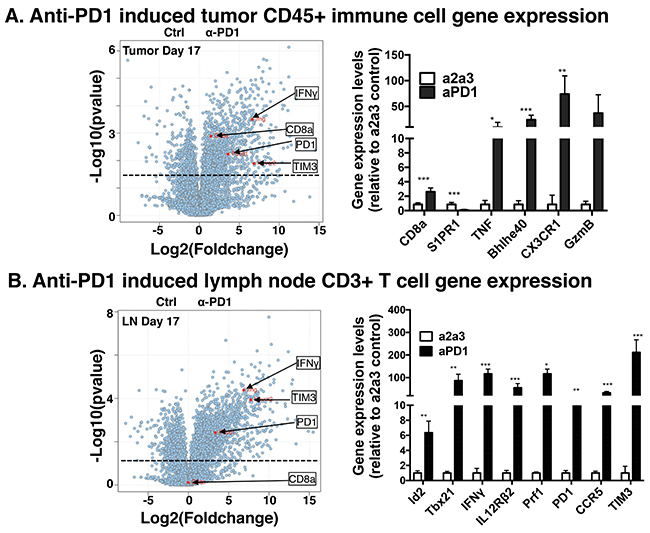 Population RNA-Seq gene expression changes in MOC22 treated with anti-PD1 in tumor microenvironment and draining lymph node.