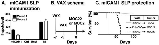 Preventative mICAM1 synthetic long peptide (SLP) vaccination.
