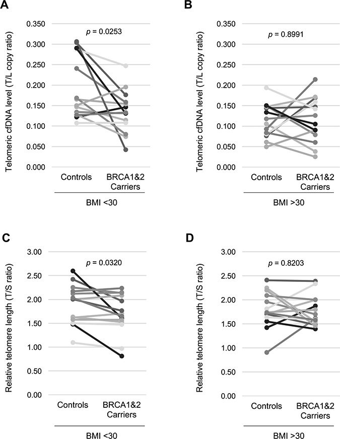 Non-obese women with BRCA1&2 gene mutation have a lower plasma telomeric cfDNA level and shorter leukocyte telomere length.