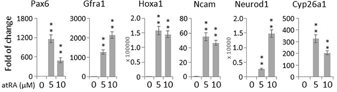 Oncotarget   Oxidative stress promotes exit from the stem cell state
