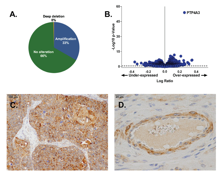 PTP4A3 expression is elevated in OvCa tumors.