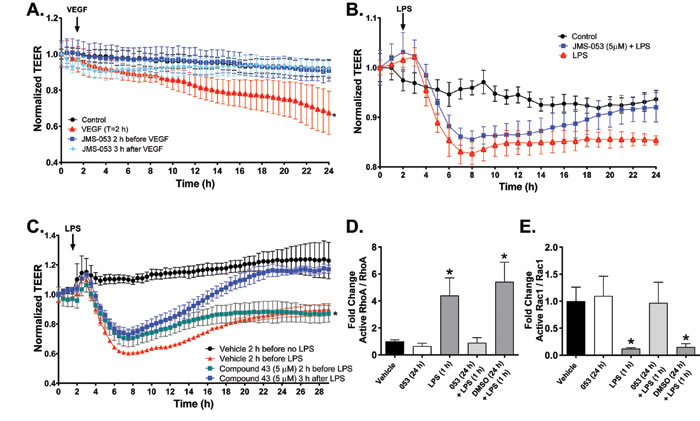 Pharmacological inhibition of PTP4A3 normalizes VEGF- and LPS-induced decreases in transendothelial electric resistance (TEER).