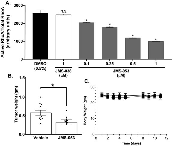 JMS-053 inhibits RhoA activation in HeyA8 cells and has antitumor activity.