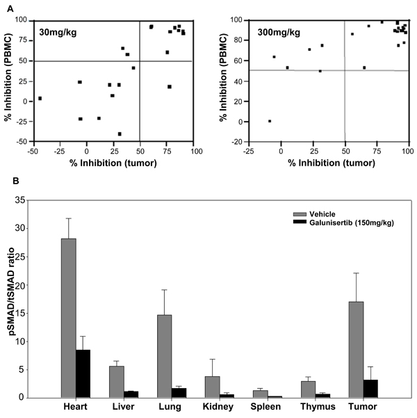 PBMCs as a surrogate tissue for assessing pSMAD modulation in tumors.