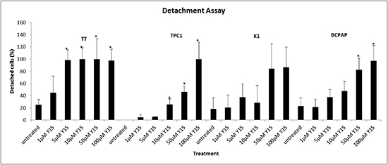 Y15 increased detachment in a dose-dependent manner in thyroid cancer cell lines.