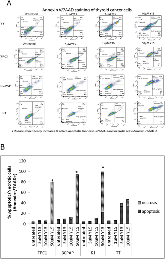 Y15 increased necrosis in a dose-dependent manner in thyroid cancer cell lines.