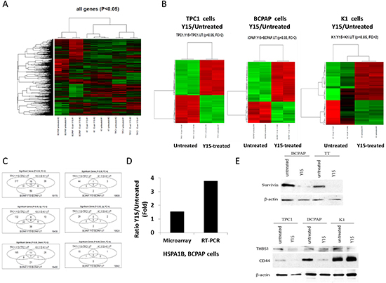 Y15 induced significant gene changes in papillary thyroid cancer cell lines.