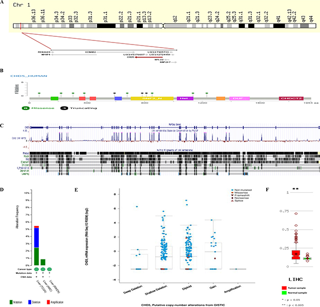 CHD5 structure, mutations and expressions in silico.
