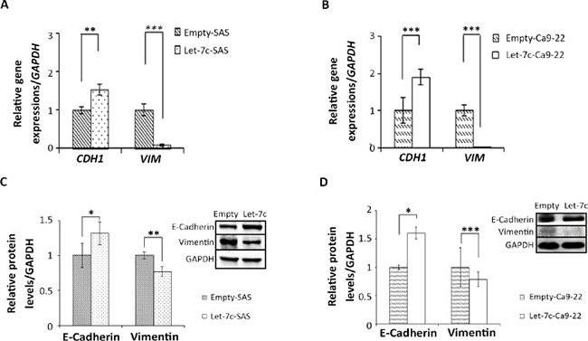 Let-7c inhibits EMT in HNSCC cell lines.