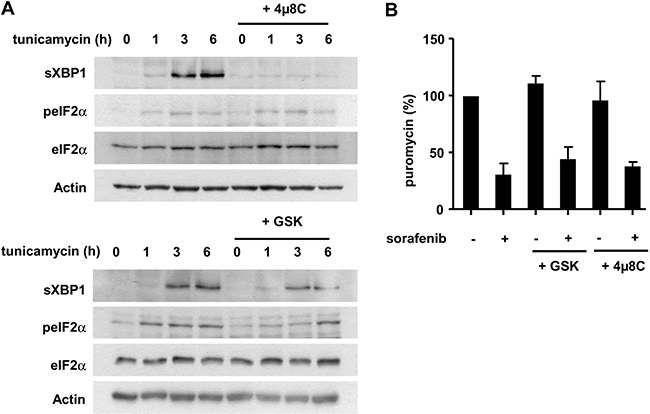The IRE1α and PERK arms of the UPR are not directly implicated in the inhibition of protein biosynthesis induced by sorafenib.