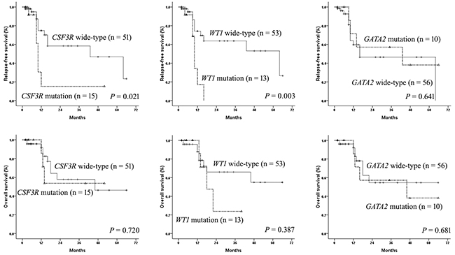 The influence of CSF3R, WT1, and GATA2 mutations on outcomes in AML patients with CEBPAdm.