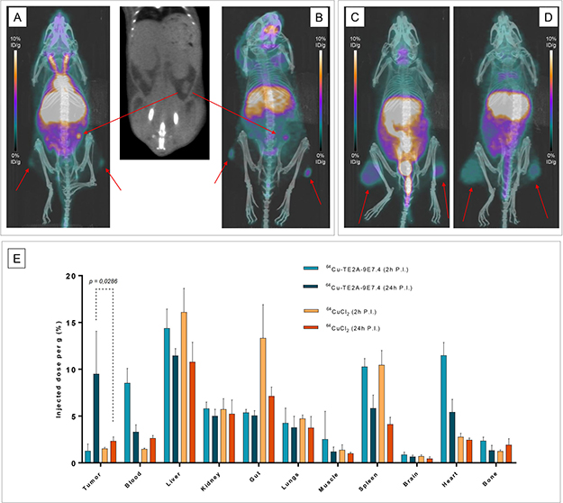 PET imaging and quantification with 64Cu-TE2A-9E7.4 and 64CuCl2 in tumor-bearing mice.