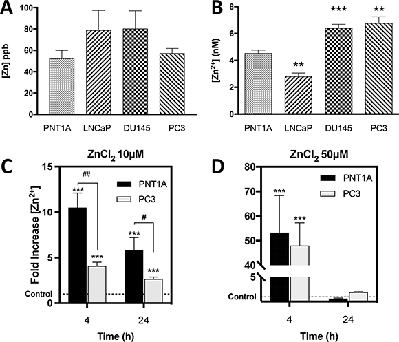 CRPC-like cells contain significantly higher basal free Zn2+ ions but equal total zinc compared to normal controls.