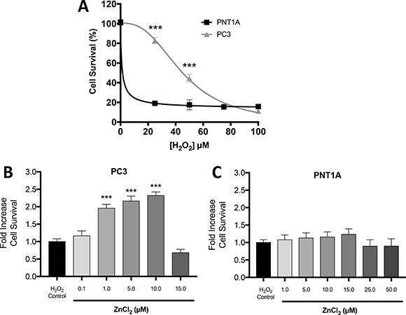 Zn2+ mediated protection against oxidative stress injury in PC3 cells.