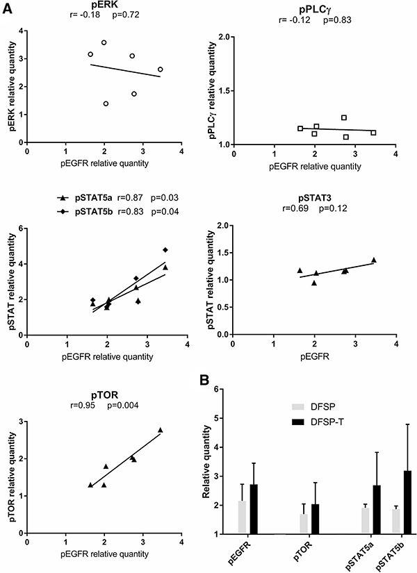 EGFR phosphorylation and downstream pathway activation in DFSP.