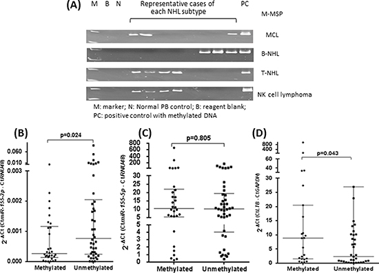Overexpression of LT-β resulted from methylation-mediated silencing of miR-155-3p.