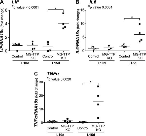 Increase of inflammatory cytokine mRNA levels in 15-day lactating MG-TTP KO mice.