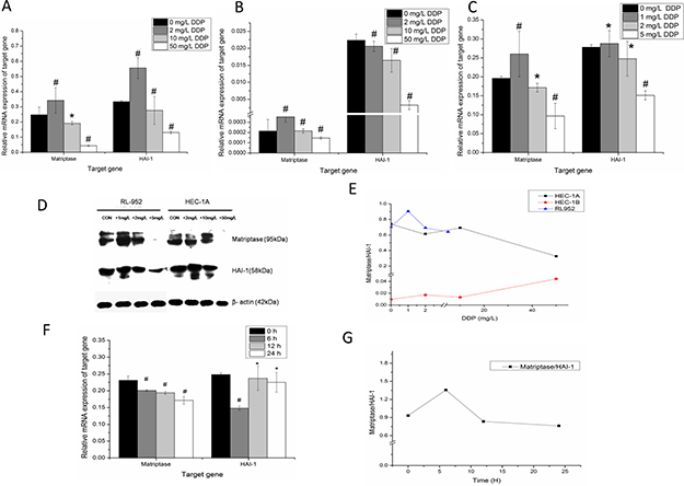 Dose-dependent regulation of matriptase, HAI-1 by cisplatin in endometrial cancer cells.