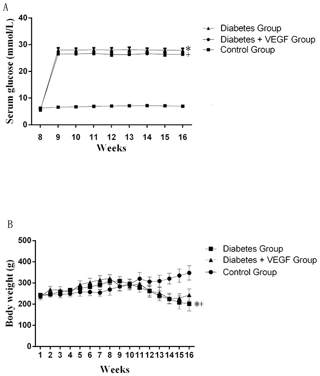 The change of serum glucose and body weights.