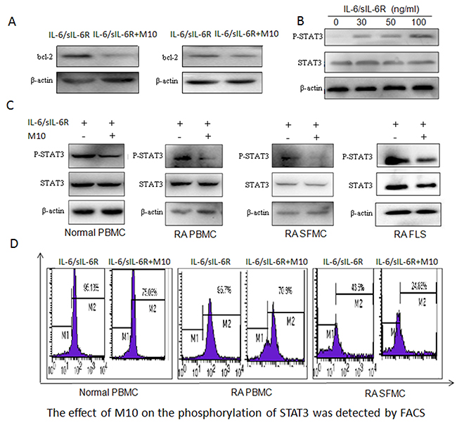 M10 intervention of the IL-6 signaling pathway in RA FLS.