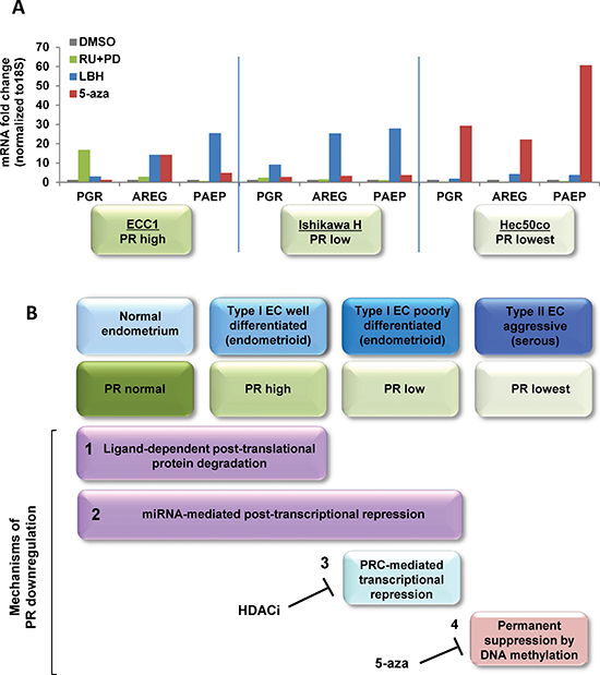 Systematic analysis of strategies to restore functional PR expression in distinct models of endometrial cancer.