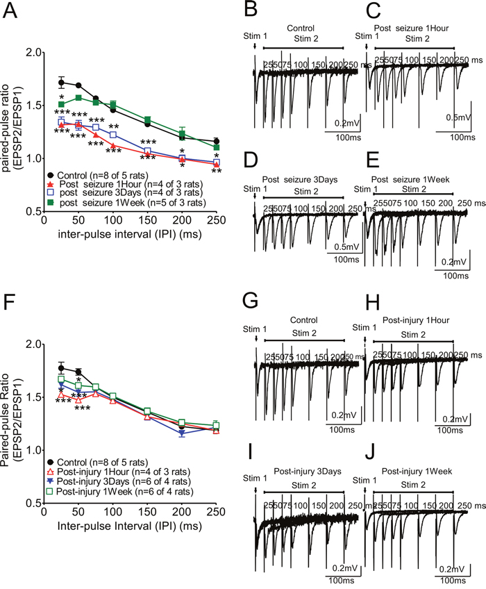Paired-pulse ratio changes in hippocampal CA1 Schaffer collateral synapses following KA-induced seizures or fluid percussion injury.